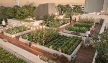 terrasses-jardins-bischheim-stradim-jardin-rooftop